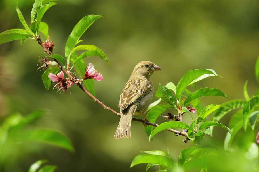 gray small bird on green leaves